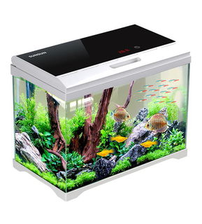 70L High Quality aquarium with filter, light and built in thermometer